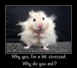 funny-demotivational-posters-stressed
